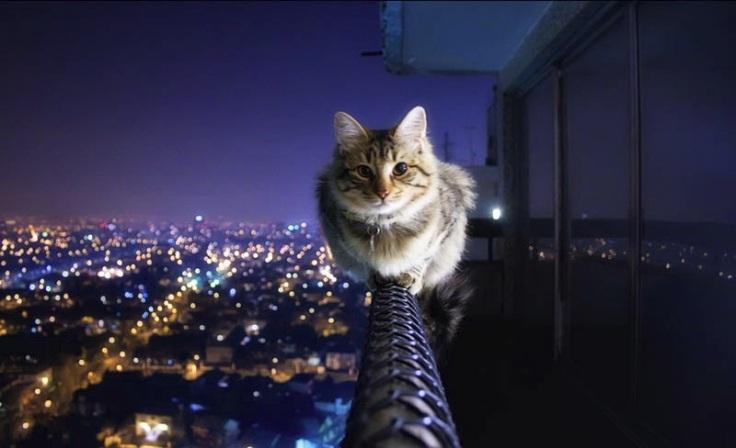 Courage-Cat