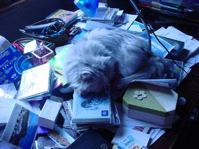 scrivania_incasinata_con_gatto