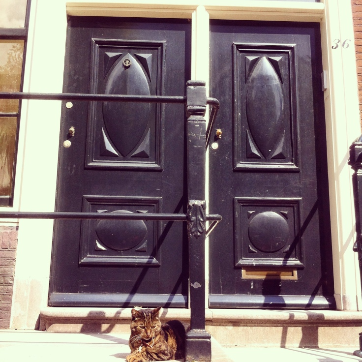 Cats of Amsterdam: the door cat