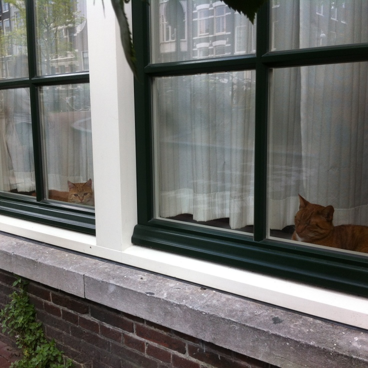 Cats of Amsterdam: twins
